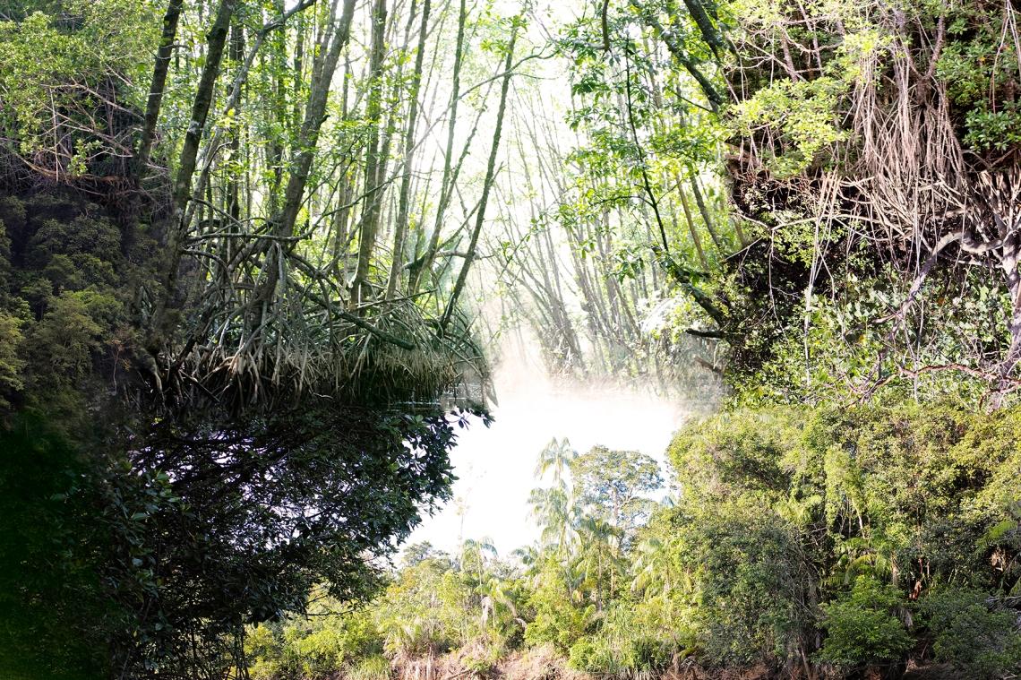 Mangrove augmentée