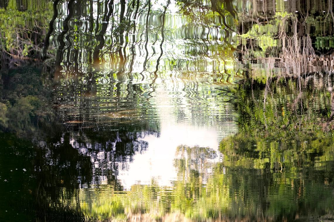 Reflet d'une mangrove augmentée